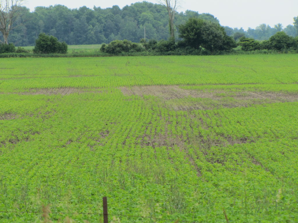 Poor soybean emergence 2011