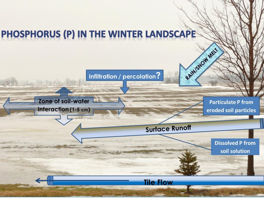 Risk of soil and nutrient movement is highest in saturated top cm of frozen soils during a winter warm-spell.