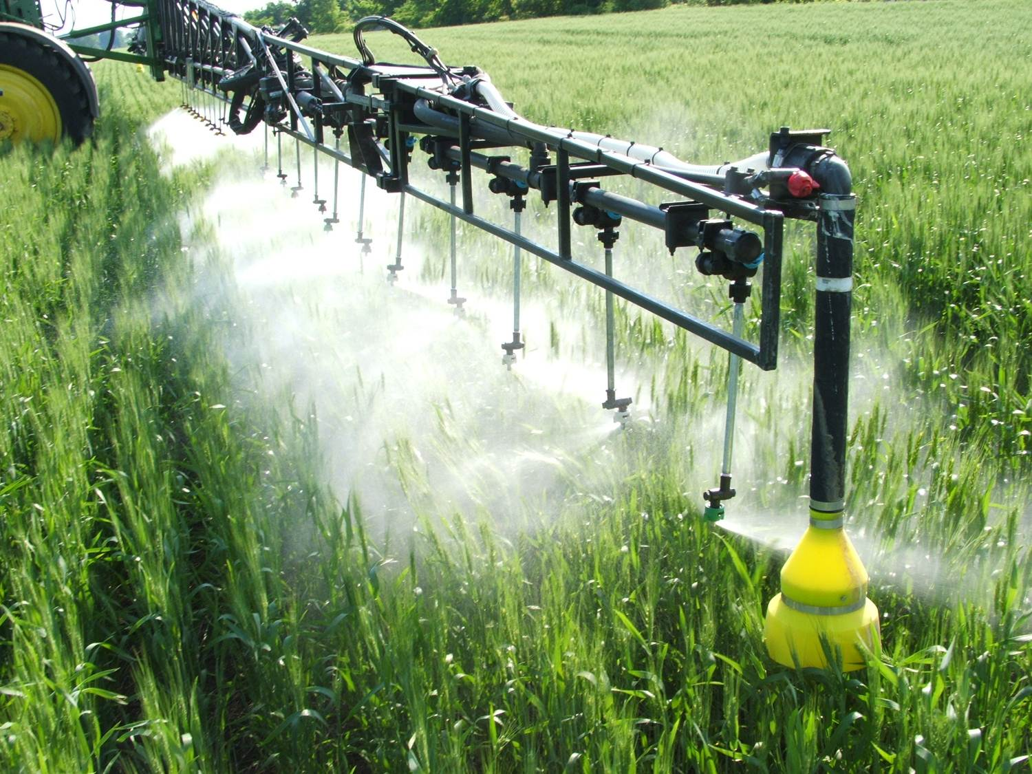 Fungicide Application Decision in Wheat