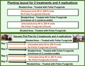 Plot Layout 2 Treatments 4 Reps