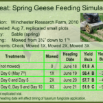 Geese Feeding Simulation Trial