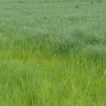 N On Grass