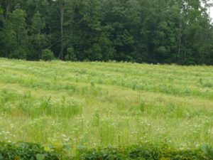 Fleabane strips in wheat underseeded to red clover for seed and in forages is difficult to manage and control