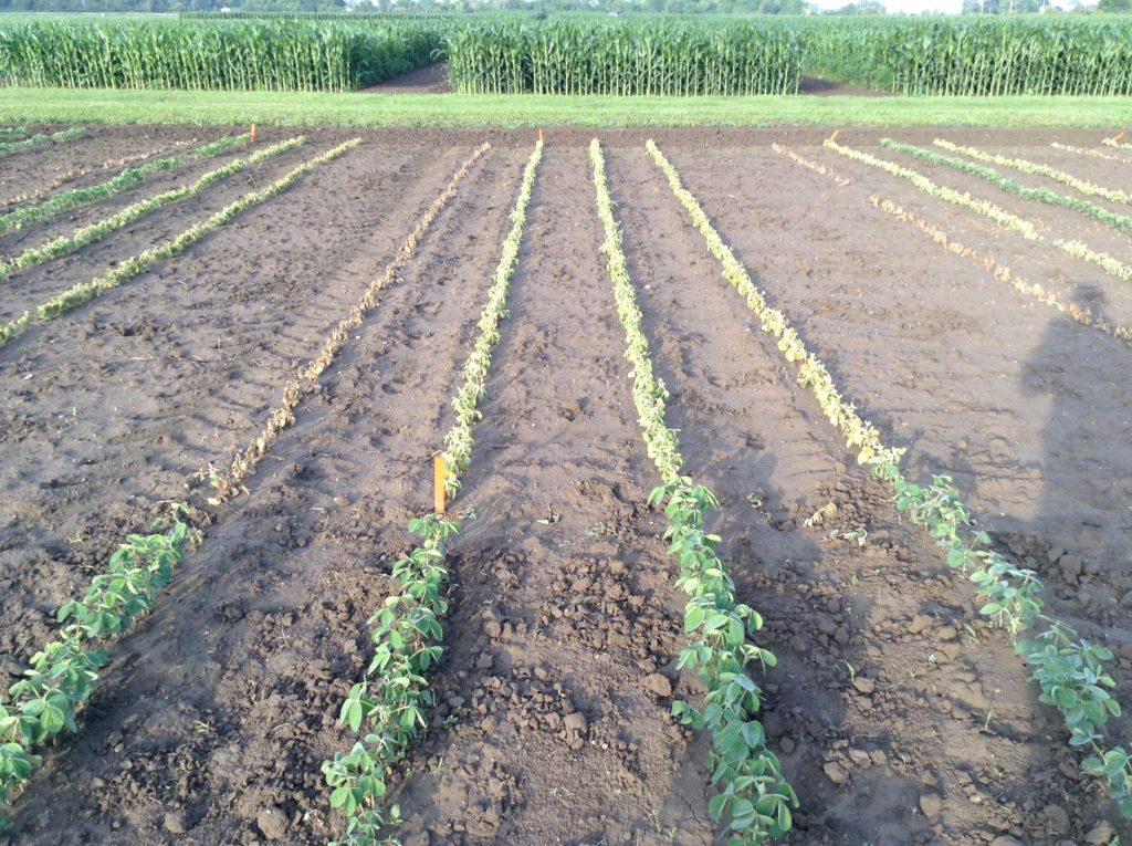 Soybean Varieties from left to right: Liberty Link, Enlist, Xtend and Roundup Ready as affected by an application of glyphosate + Lontrel
