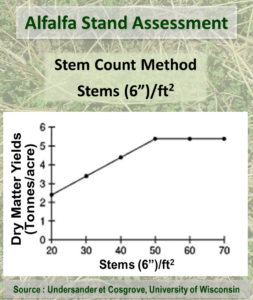 Alfalfa Stand Assessment