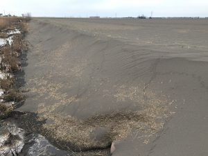 Figure 4. What fertility has been lost from the field due to this wind erosion? Kent county, March 8, 2017 (Photo credit: Colin Little, Lower Thames Valley Conservation Authority).