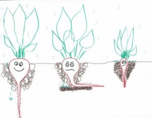 Root growth is stunted in compacted soils