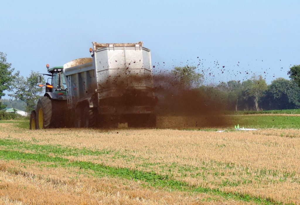 Photo of compost application into a standing crop of red clover will provide nutrients and organic matter to feed soil micro organisms while minimizing compaction damage.