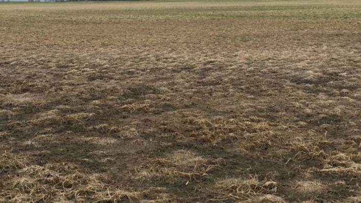 Soil landscape units affect crop survival