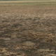 Soil landscape units affect crop survival