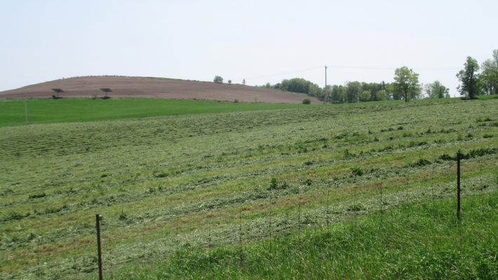 first cut hay down in Peterborough county