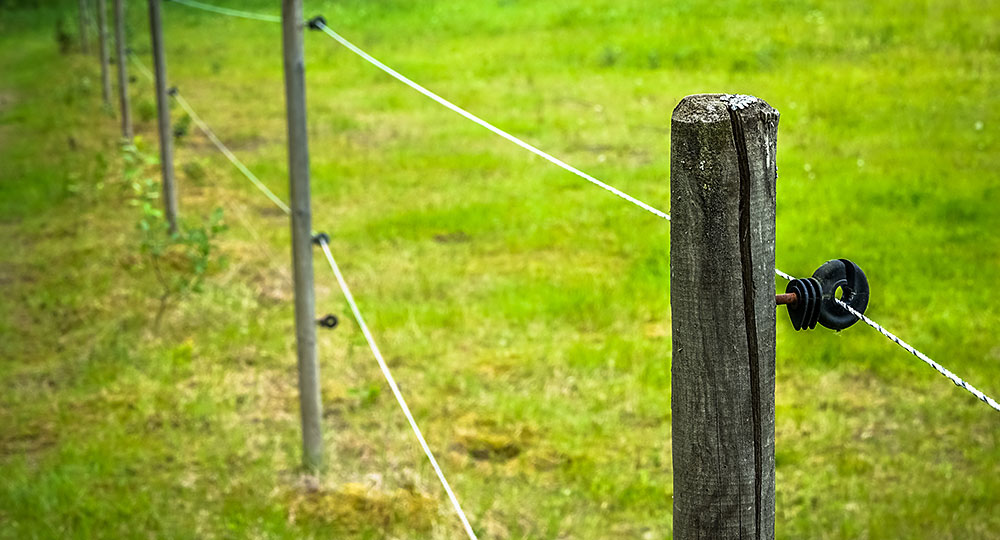 An electric fence at the edge of a green field