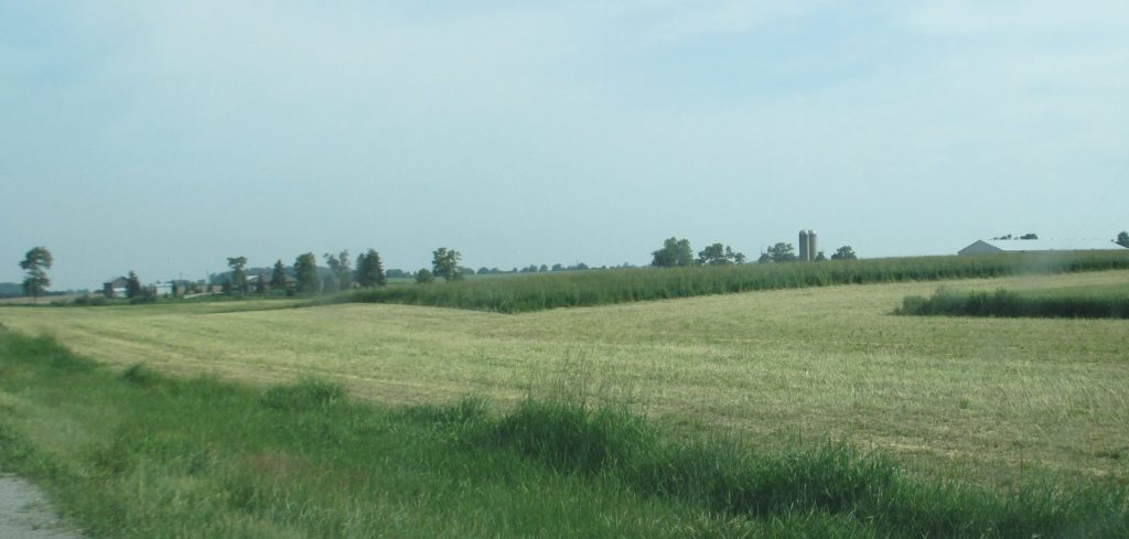 Figure 1. Hay fields containing grasses should not be cut closer than 7.5 cm (3 inches). If the field looks like wheat stubble after it has been harvested, the cutting height should be raised.