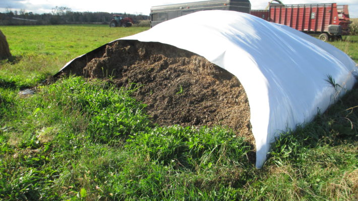 open corn silage in a bag silo