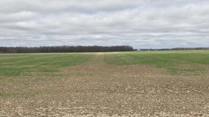 A field of winter wheat in April, 2019 that shows parts of the field with adequate stands and areas of the field that have winter killed and are bare.