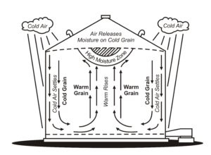 Diagram of a grain bin showing cool air traveling down the inside wall of a grain bin and rising up through the centre of the stored grain mass, resulting in a zone of high moisture at the top of the bin in the centre.