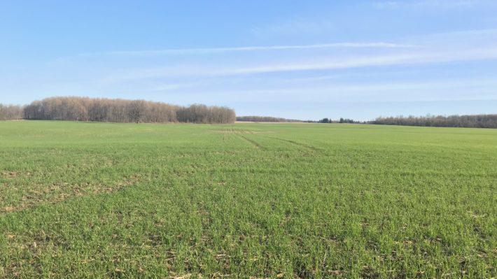 Herbicides, Fungicides, Nitrogen and Sulphur – Prioritizing
