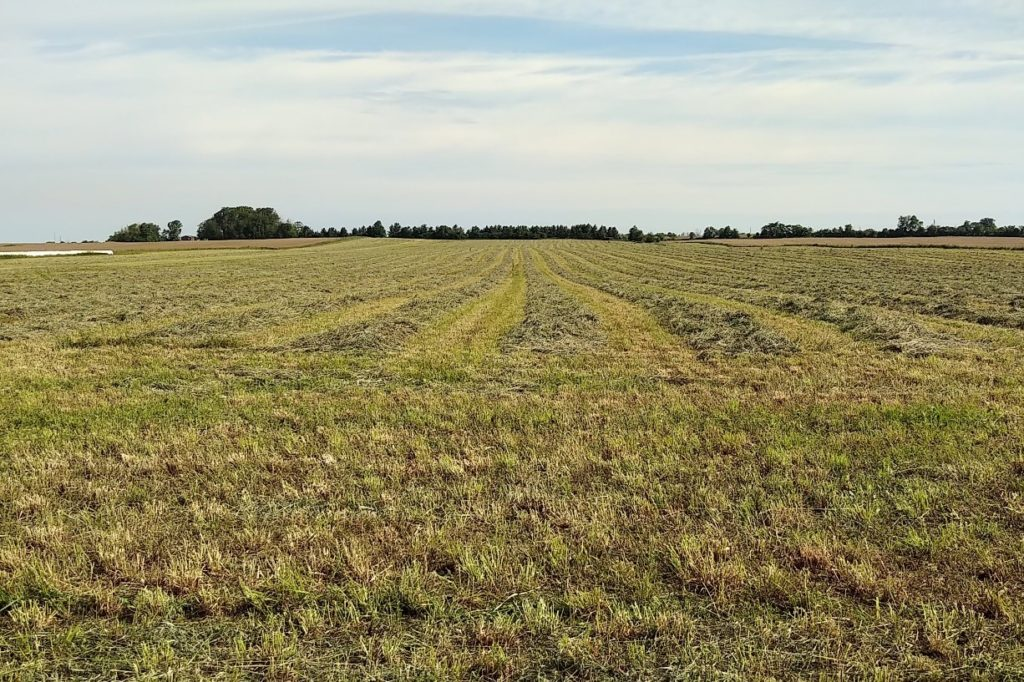 Figure 1. Hay field in Perth County on Wednesday, June 19th.