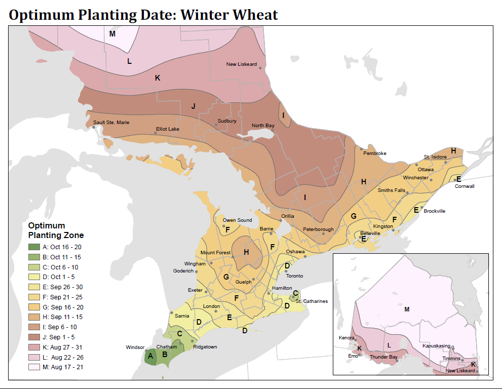 Figure 1. Optimum planting dates for winter wheat in Ontario. Planting date map was created in partnership with Weather Innovations Consulting LP.