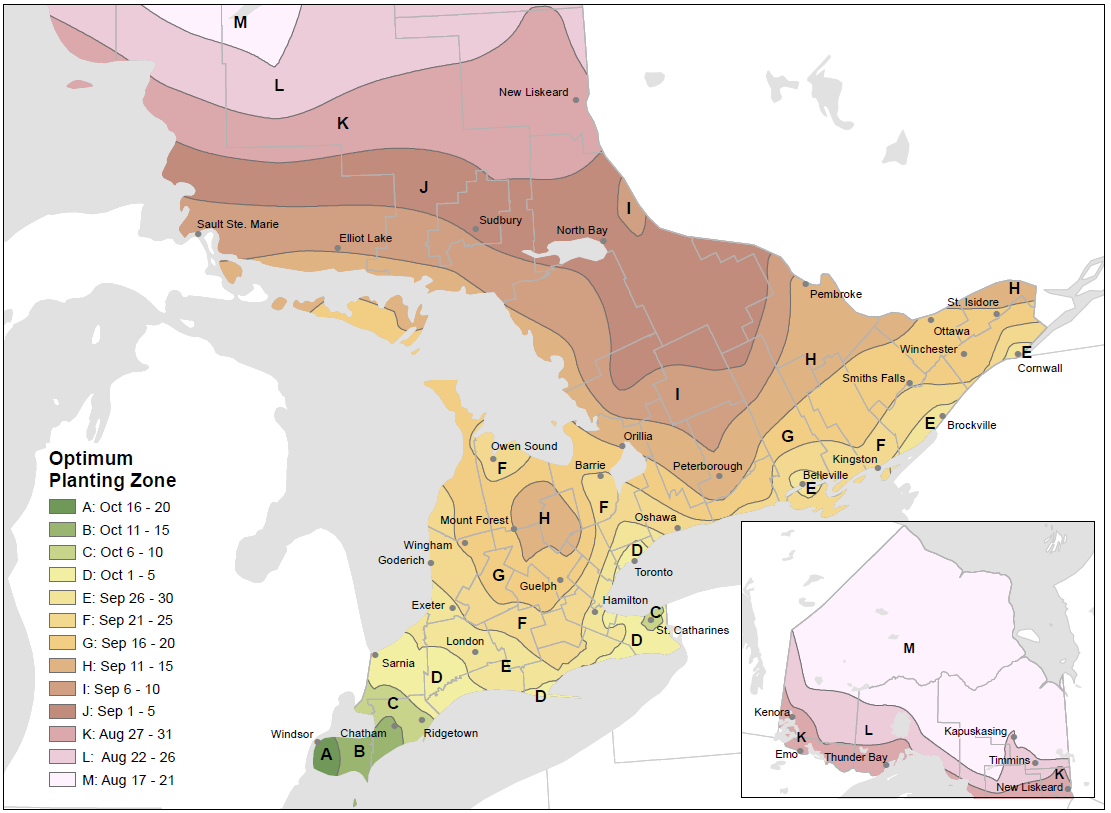 map depicting the optimum planting dates for winter wheat across Ontario