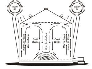 This diagram shows convective air movement inside a grain bin