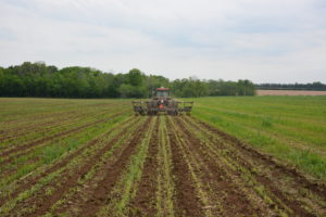 strip tilling in a field of rye re-growth