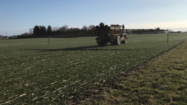 N application to wheat