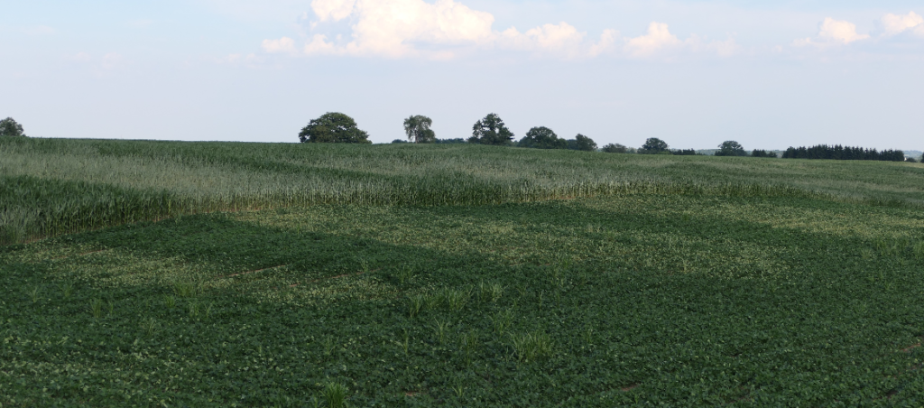 Figure 3. Corn and Soybean response to dry conditions in a field can inform on prior management decisions.
