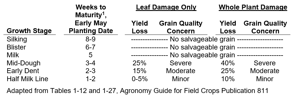 Table 2. Expected weeks to maturity, yield and grain quality risks for frost received at various grain fill stages.