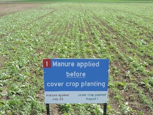 Figure 1. Manure applied 1 week ahead of cover crop seeding - growth 3 weeks after seeding.