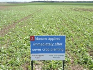 Figure 2. Manure applied immediately after cover crop planting – growth 3 weeks later