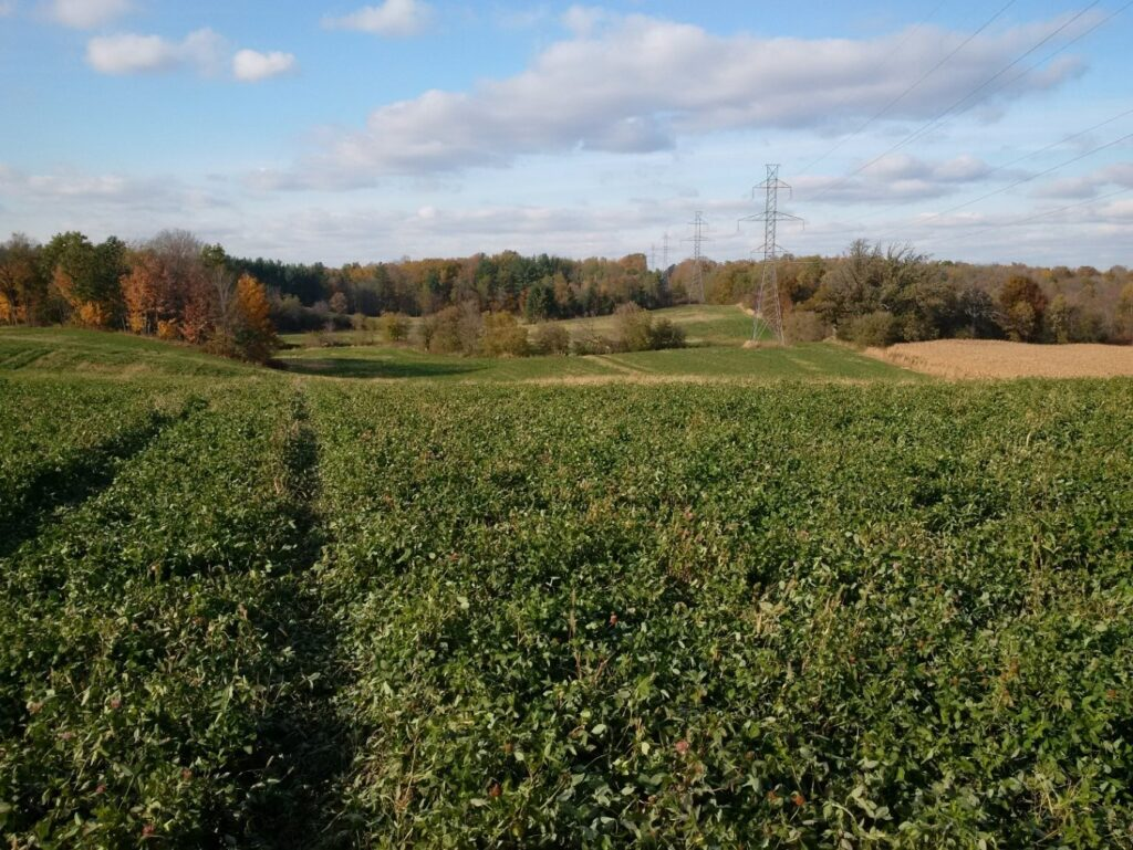 Figure 3. Red clover on a highly erodible, sloping soil characteristic of the NE region of the Lake Erie watershed.